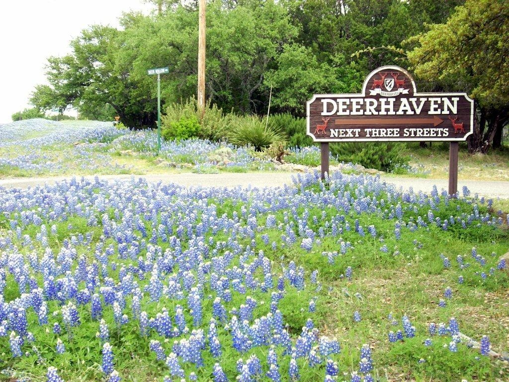 Blue Bonnet time in Deerhaven