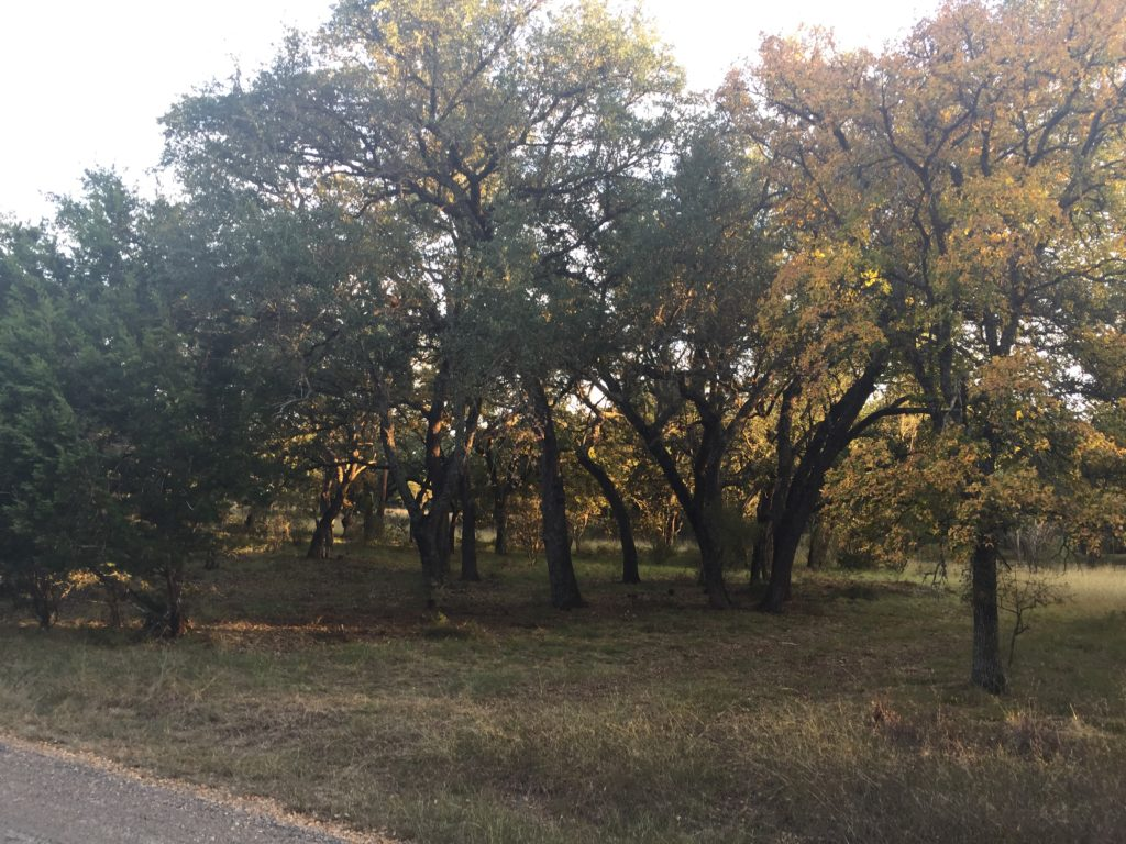Two Oak Tree Covered Lots For Sale